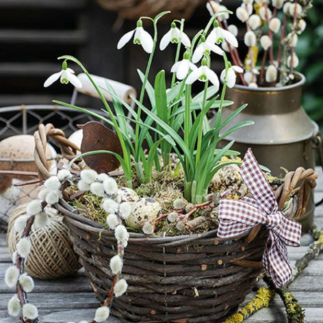 Serviette Snowdrops in